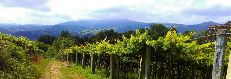 Vignobles de Getaria